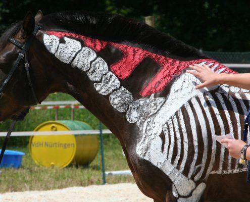Eine Studierende zeigt ein Pferd