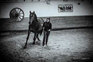 Kursteilnehmerin Christine Bär mit Ihrem Trakehner Pferd Elfe