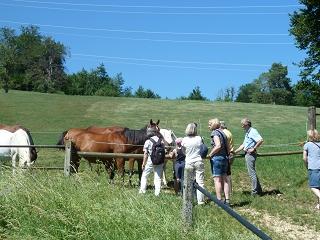 Warmblutstuten mit Fohlen in Marbach